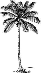 Coconut Palm clip art