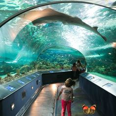 Planning a trip to Toronto Make sure these familyfriendly activitiesloved by visitors and locals alikeare on your vacation checklist.<br> Toronto Vacation, Toronto Travel, Ontario, Toronto Canada, Toronto City, Bastille, Travel With Kids, Family Travel, Family Trips