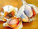 """Onion Extraordinaire by Lori Pitten Jenkins Watercolor ~ 13"""" x 17"""""""