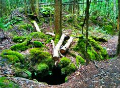 hole in the forest by hamapenguin,