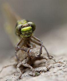 Animals macro photography (4)
