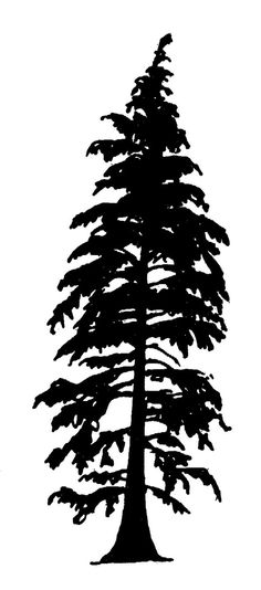cedar tree silhouette with roots - Google Search