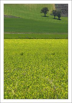 Fields of Castilla - Penafiel, Valladolid Spain