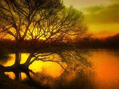 colourscapes:  Nature (L'Arbre d'Eudes) by Tiquetonne2067 on Flickr.