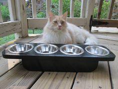 Cat Feeder  Pet Feeder   Four stainless steel by WoodyToolWorks, $42.50