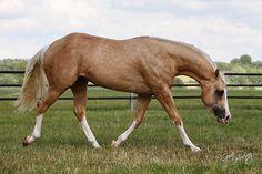Big Chex To K Man Quarter Horse