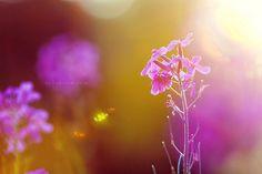 Flower flare, II