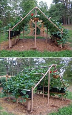 Neat idea! -- Build a trellis out of PVC pipes.