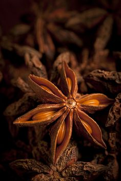 Seeds Star Anise seed and pod Whimsical Home and Garden Spices And Herbs, Star Anise, Foto Art, Seed Pods, Earth Tones, Macro Photography, Magick, Earthy, Herbalism