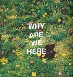 why are we here // #flora #whyarewehere #existentialcrisis
