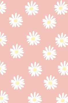 white daisies on pink