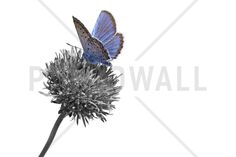 Julius Butterfly - Colorsplash - Fotobehang