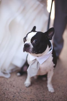 ask us if we're sick of cute little pups dressed up and our reply is NEVER!  Photography by floatawaystudios.com