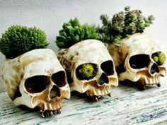 Skull planters for my succulents