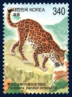 Protection of Wild Animals and Plants, Leopard, Animals, 1998 03 21, 특정야생동·식물보호특별(여섯번째묶음), 1998년03월21일, 1941, 표범, postage 우표