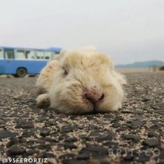 Rabbit Island is an island in Japan that is overrun with fluffy bunnies