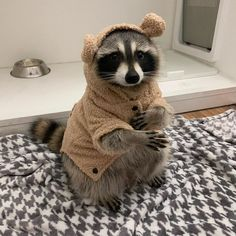 Animals And Pets, Funny Animals, Pet Raccoon, Tier Fotos, Cute Little Animals, Cute Creatures, Fur Babies, Cute Pictures, Kitty