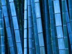 Cheap blue bamboo seeds, Buy Quality bamboo seeds directly from China tree seeds Suppliers: 20 pcs/bag rare blue bamboo seeds, decorative garden, herb planter bambu tree seeds for diy home garden Ipad Mini Wallpaper, Bamboo Wallpaper, Widescreen Wallpaper, Wallpapers, Hd Backgrounds, Textured Wallpaper, Bamboo Seeds, Bamboo Plants, Bamboo Garden