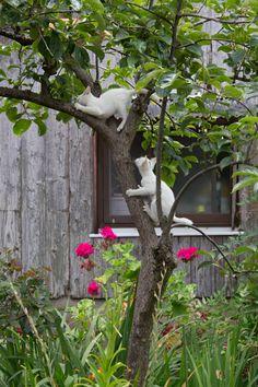 """* * KITTEN BELOW: """" Wut happened? Yoo scratch yer butt on a branch ? """""""