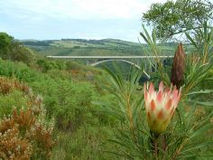 A nature scape with the Van Stadens bridge in the background west of Port Elizabeth, South Africa.