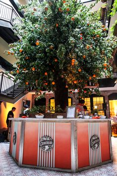 Our giant orange tree inside The Broome Hotel, New York City.