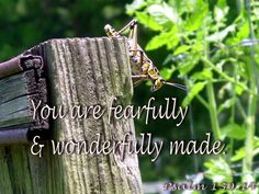 You are fearfully and wonderfully made. Father's Love Letter, Psalm 1, Fathers, Lettering, Dads, Parents, Drawing Letters, Brush Lettering