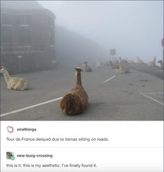 If it was alpacas I would call it the Alpacalypse!