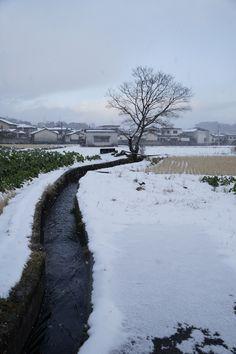 雪の大原野