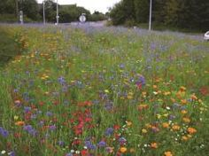 How to create a mini wild flower meadow. You can still sow your wild flower seed in late autumn. Some perennials need the winter cold to spark them to germinate.