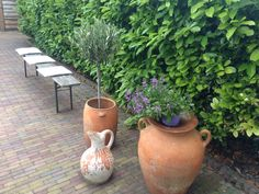 Grown Planter Pots, Garden, Garten, Lawn And Garden, Gardens, Gardening, Outdoor, Yard, Tuin