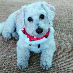 #friyay #holidayvibes #pilates #mascot aka #mylittleman #dog #studio #pilatespup #dogs #pilateslovers #pilatesfit #westlakevillage #ventura #thousandoaks #agourahills #fitgirls #fungirls #healthy #fit #instadogs #fitnessaddict #fitness #fitnessfun #fitforlife #calabasas #fluffydogs #agirlandherdog #dogfriends #dogsofinstagram #womansbestfriend  Check out BobbyOWilson.com for fitness and nutrition related articles!