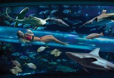 The hottest places in Las Vages for cooling down - hydro slide in a shark tank