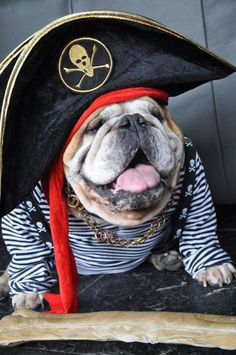 ❤ Mighty Cute Pirate.. Arrrr ❤ Posted from Baggy Bulldogs