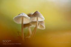 Autumn Scenery by christldeckx #nature #photooftheday #amazing #picoftheday