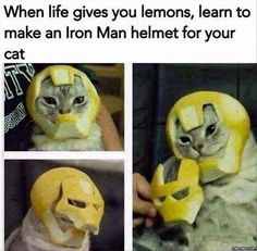 26 Funny Photos That Are Sure to Make You Laugh. - Informationen zu 26 Funny Photos That Are Sure to Make You Laugh. Animal Jokes, Funny Animal Memes, Cute Funny Animals, Funny Animal Pictures, Cat Memes, Funny Cute, Cats Humor, Crazy Funny, Sports Pictures