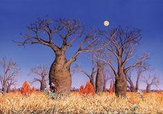 Rosa do Deserto (Adenium obesum) Australian Painting, Australian Artists, Landscape Art, Landscape Paintings, Landscapes, Acrilic Paintings, Unusual Plants, Desert Rose, Dot Painting