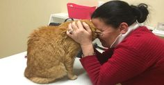 Sick Woman Left Her Cat With A Neighbor, Then Her Neighbor Moved Away, Leaving Her Cat Alone…