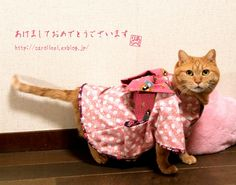 happy new year~ -akemashite omedetou gozaimasu- お茶の時間にしましょうか-キャロ&ローラのちいさなまいにち-
