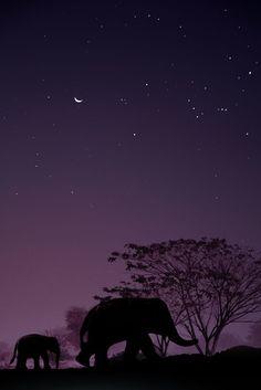 Dreamland by Anuchit Sundarakiti on 500px