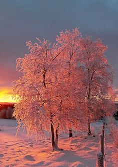 """Norway, photo by Frode Langdalen. I would get up for sunrise every single morning if I lived somewhere that beautiful""""Sunrise."""" Norway, photo by Frode Langdalen. I would get up for sunrise every single morning if I lived somewhere that beautiful All Nature, Amazing Nature, Pink Nature, Flowers Nature, Winter Szenen, Winter Sunset, Winter Light, Snow Scenes, Winter Beauty"""