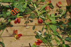 Lotte & Bloom Bloom, Plants, Wedding, Valentines Day Weddings, Plant, Weddings, Marriage, Planets, Chartreuse Wedding
