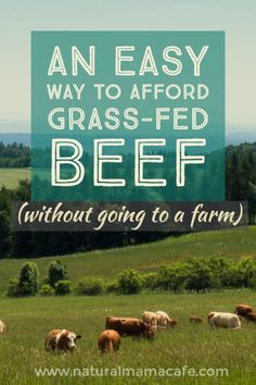 How to cook grass-fed beef to make four nights of meals from 2 lbs. of meat with this recipe. Stretch your budget and make grass-fed ground beef affordable for healthy, clean-eating, paleo, nutritious, nourishing meals.