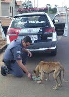 """""""O GRITO DO BICHO"""": Repercussão da foto do PM dando comida ao cachorro..."""