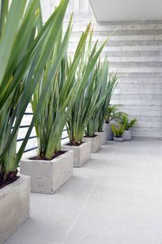 """""""Desire makes plants very brave, so they can find what they desire; and very tender, so they can feel what they find"""" - AMY LEACH - Modern Landscaping, Front Yard Landscaping, Backyard Patio Designs, Interior Plants, Plant Decor, Garden Projects, Garden Inspiration, Indoor Plants, Landscape Design"""