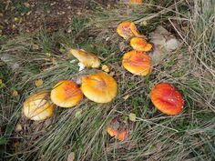 Pilze Pizoccolo Pumpkin, Outdoor, Mushrooms, Hiking, Outdoors, Pumpkins, Outdoor Games, Squash, The Great Outdoors