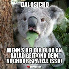 Gemein! #salat #spätzle #gesicht #essen #schwäbisch #schwaben #schwoba #württemberg