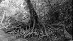 Tree roots by the river by Stuart Meikle