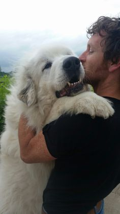 Pyrenean mountain dog Pyrenees Puppies, Great Pyrenees Dog, Dogs And Puppies, Doggies, Really Big Dogs, Giant Dogs, White Dogs, Mountain Dogs, Cute Funny Animals