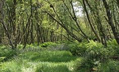 woodland glade - Google Search