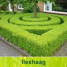 Ilex crenata (although usually much darker green than this) Woodland Garden, My Secret Garden, Small Gardens, Hedges, Garden Inspiration, Garden Ideas, Stepping Stones, New Homes, Exterior